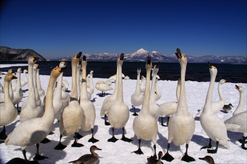 「みんなで背伸び」郡山のまつりと観光写真コンテスト第26回入賞作品