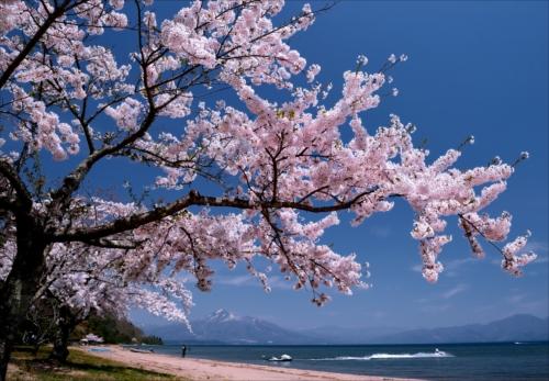 「湖上に舞う」第12回猪苗代湖・裏磐梯湖沼フォトコンテスト入賞作品