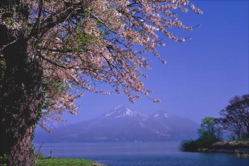 The Prize winner of 9th Photo Contest of Lake Inawashiro and Urabandai Lakes and Marshes Kohan no sakura