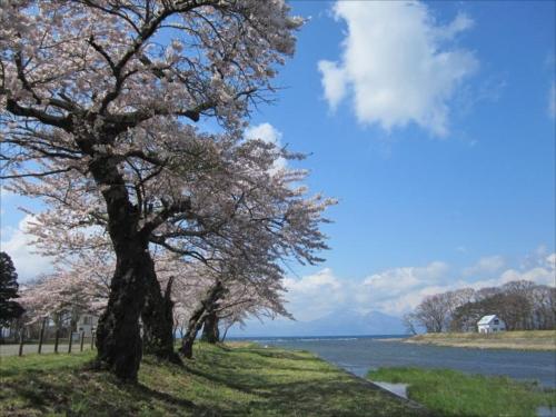 舟津公園の桜とともに