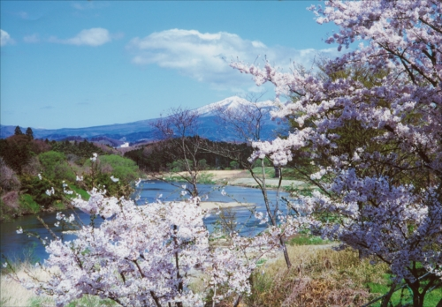 The Prize winner of 21st Photo Contest of Festivals and Sights of Koriyama City Kohan no sakura