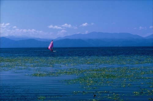 The Prize winner of 3rd Photo Contest of Lake Inawashiro and Urabandai Lakes and Marshes asaza no saku inawashiroko