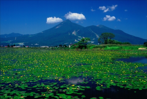 The Prize winner of 3rd Photo Contest of Lake Inawashiro and Urabandai Lakes and Marshes Mizube no harmony