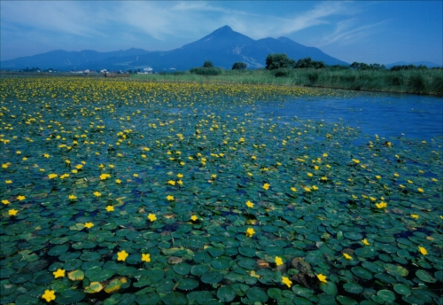 The Prize winner of 1st Photo Contest of Lake Inawashiro and Urabandai Lakes and Marshes kojo no kazeni yurete